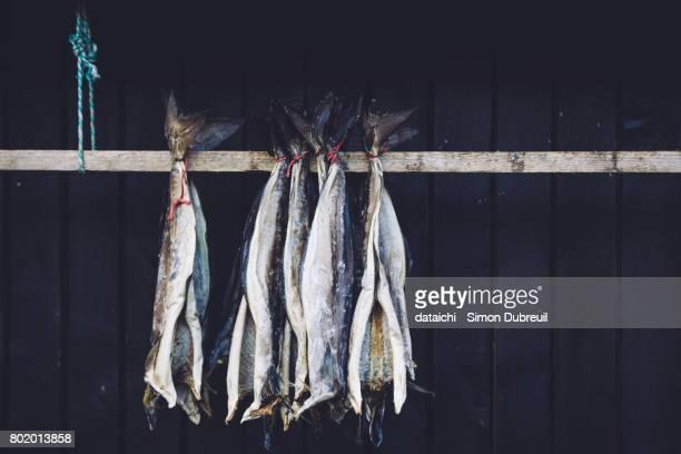 Cod drying in Gjógv