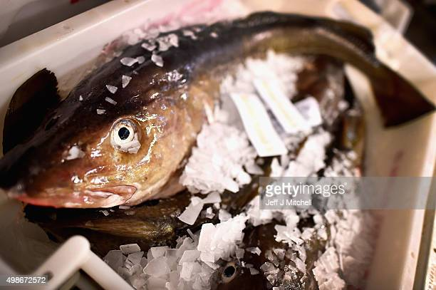 Cod is on display to be sold at Peterhead fish market on November 25 2015 in Peterhead Scotland Recent negotiations could see an increase in North...