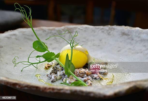 cod `yolk` , sage cream , radish , salt and vinega - cumbria stock photos and pictures