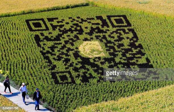 A QR code design created using different varieties of rice is seen in a paddy during the harvest season in Shenyang in China's northeast Liaoning...