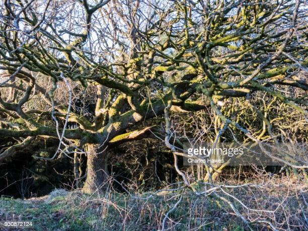 Coed Dolgeod wood near Pontrhydfendigaid, Ceredigion. The Cambrian Way, Wales, UK