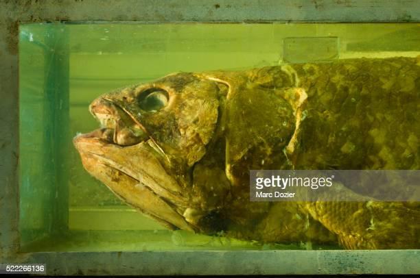 Coelacanth in Madagascar