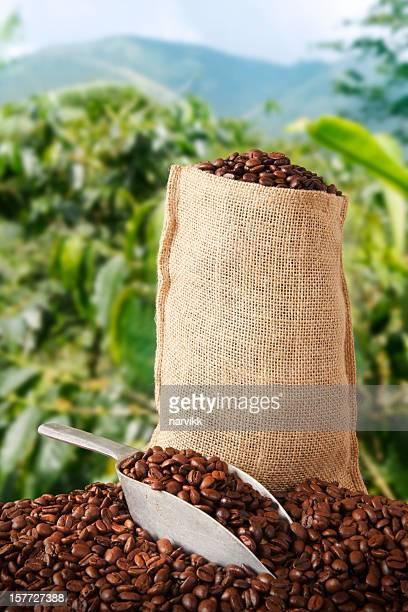 Coffee bag and plantation behind