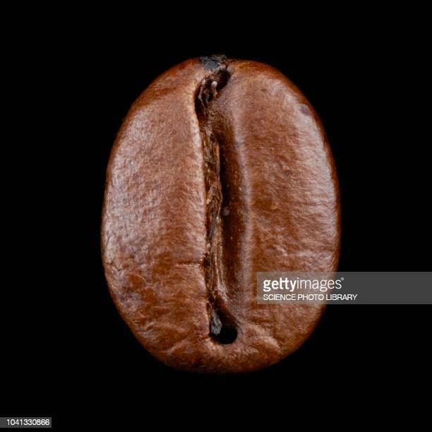 coffee bean - grain de café torréfié photos et images de collection