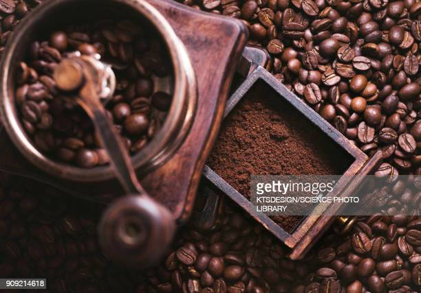 coffee beans and grinder - coffee grinder stock photos and pictures