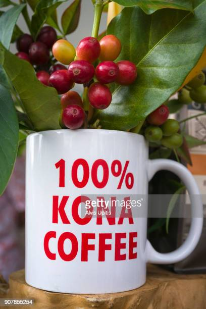 Coffee beans at cherry stage in coffee cup in Hawaii
