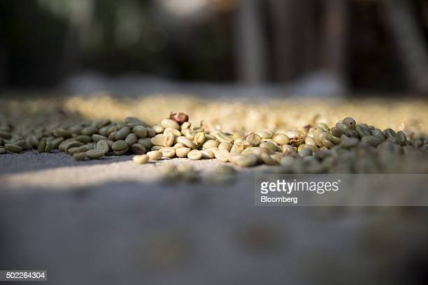 Coffee beans dry on a home patio in San Miguel Escobar Guatemala on Thursday Dec 17 2015 Coffee exports rose in November by almost 12 million pounds...