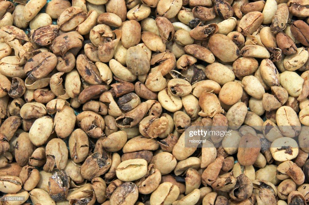 Coffee Beans Drying Near El Jardin Antioquia Colombia Stock Photo