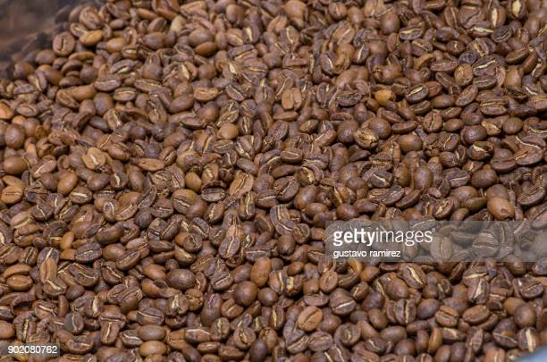coffee beans in plantation