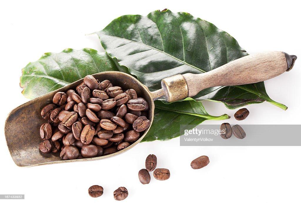 Granos de café de forma y deja. : Foto de stock