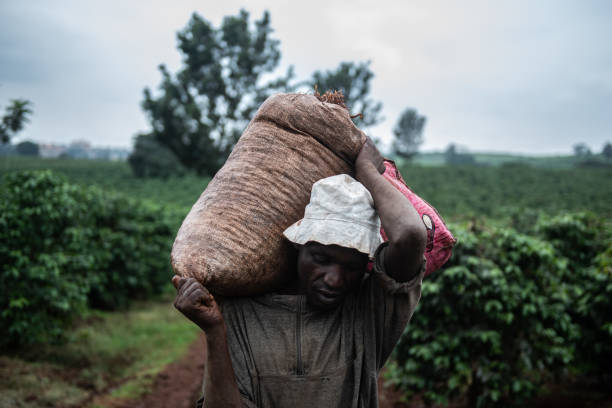 KEN: Kenya's Coffee Producers, Long Focused On Export, Grow A Coffee Culture At Home