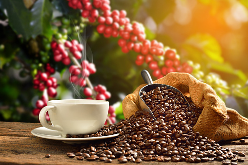 Coffee cup coffee beans 880720550