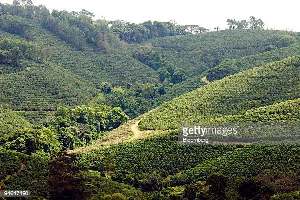 A coffee farm in Guaxupe Brazil is pictured on Tuesday November 21 2006 October rains came too late for trees in Brazil's prime coffeegrowing region...