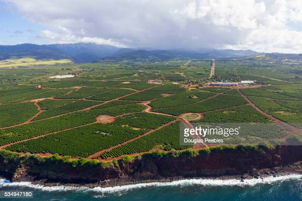 Coffee Farm, Kauai, Hawaii