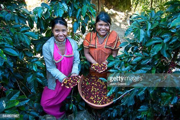 coffee farm - costa rica stock-fotos und bilder
