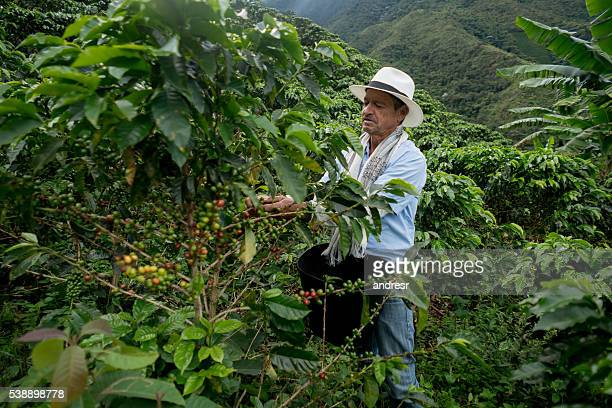 Coffee farmer picking up beans
