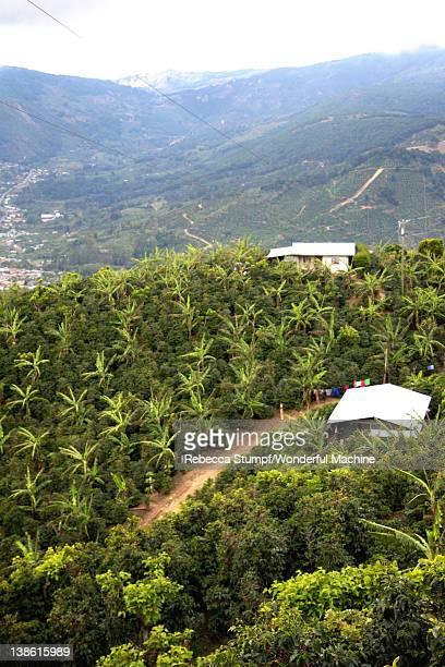 Coffee farms in Santa Maria de Dota