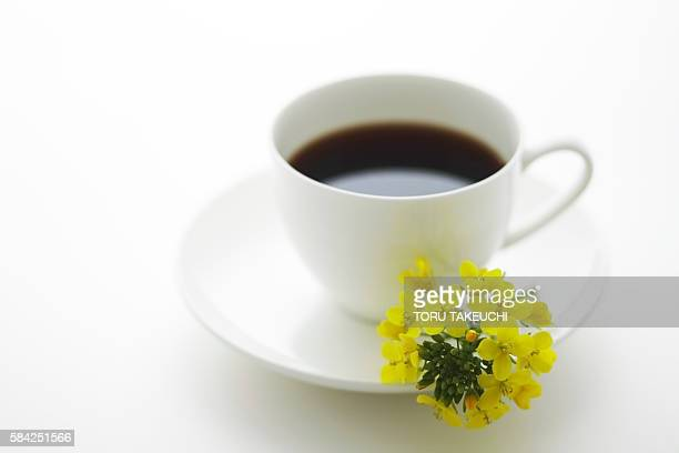 Coffee in a cup and Oilseed Rape