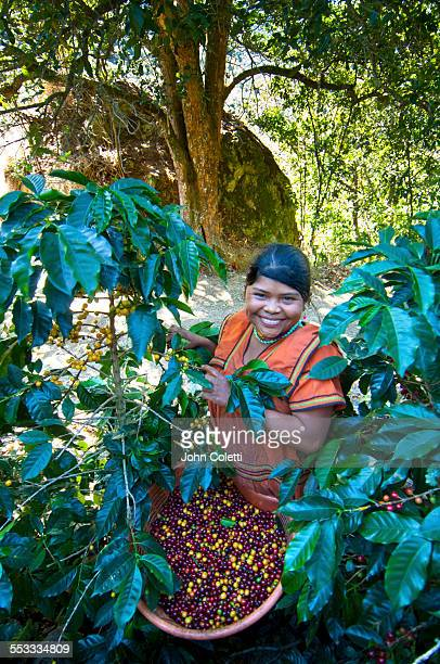 Coffee picker, Costa Rica