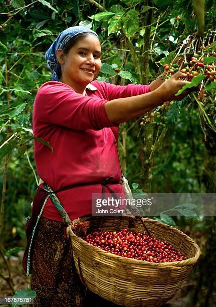 Coffee Picker, El Salvador
