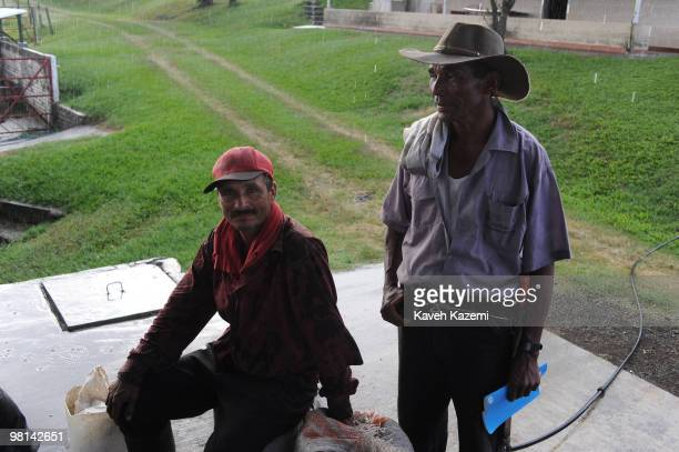Coffee pickers at the end of working day under rain in a farm in Combia Risaralda Risaralda is a department of Colombia It is located in the western...