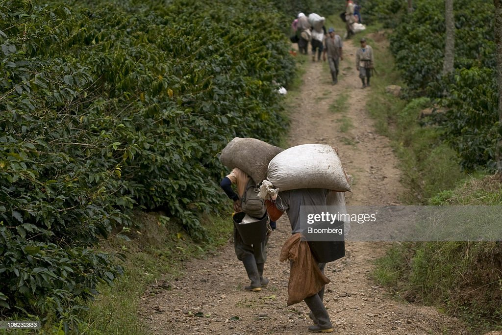 Colombia's Top Coffee Farmers Say Output May Drop : News Photo