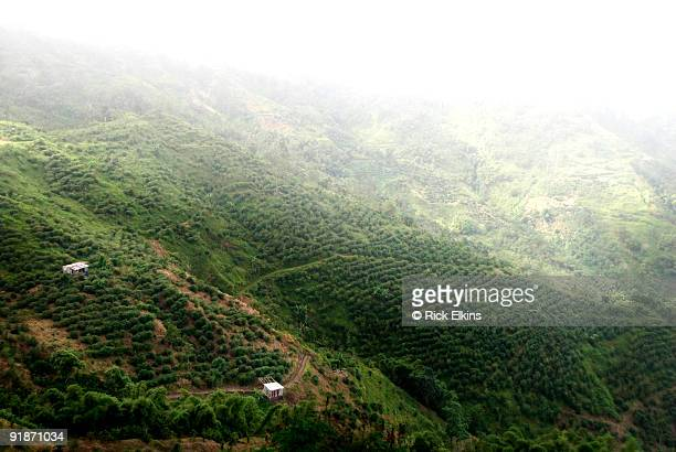 Coffee plantation in Jamaica