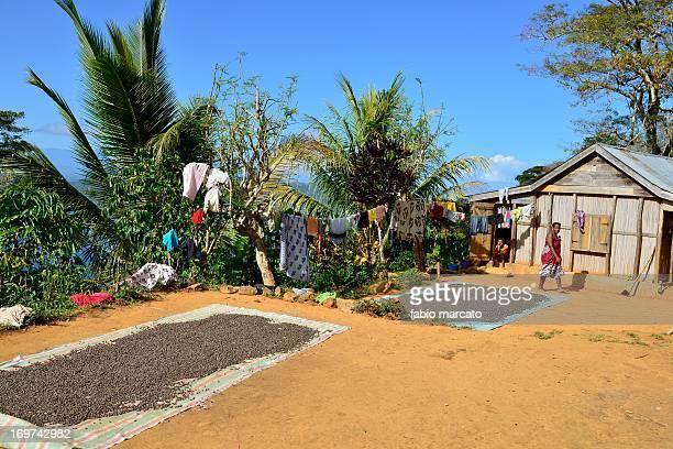 CONTENT] Coffee plantation in Nosy Komba Madagascar