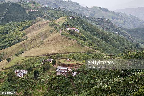Coffee plantations in hilly landscape