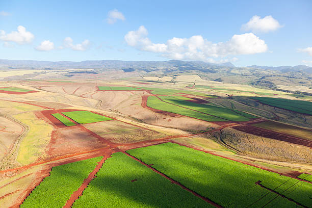 """""""Coffee Plantations, Kauai"""""""