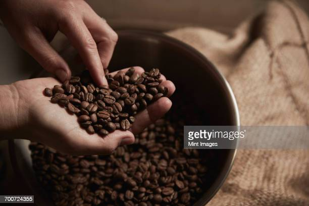 A coffee shop. A person holding a handful of fresh roasted coffee beans.