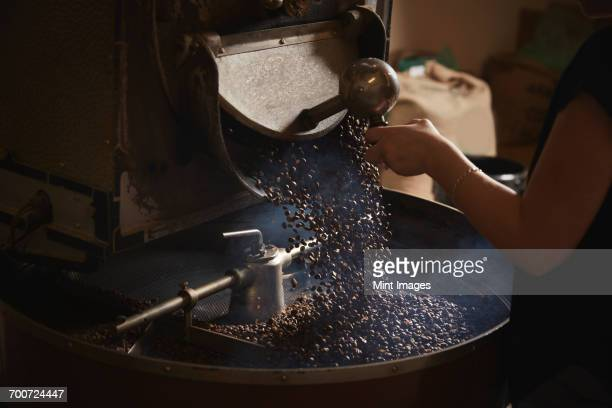 A coffee shop. A person opening a metal shute and coffee beans falling into a roasting drum.
