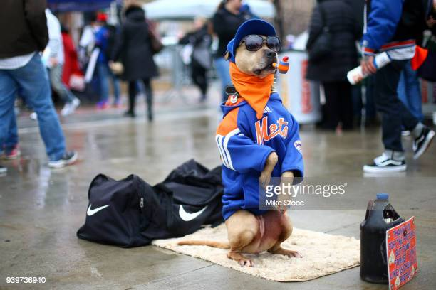 Coffee the dog poses for a photo prior to the start of the Opening Day game between the New York Mets and the St Louis Cardinals at Citi Field on...