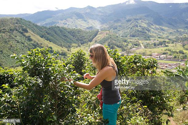 Coffee tourism