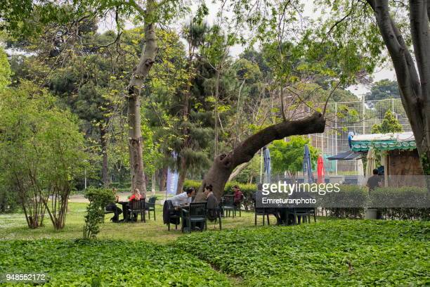 a coffeehouse with relaxing people in a public park. - emreturanphoto stock pictures, royalty-free photos & images