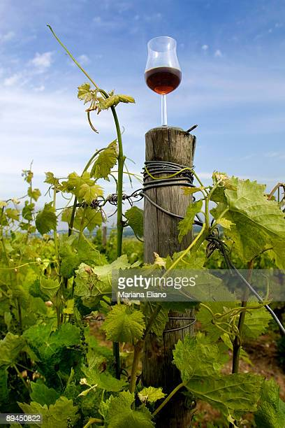 Cognac France Vineyards near Cognac The town gives its name to one of the world's bestknown types of brandy Drinks that bear this name must be made...