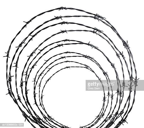 Coiled barbed wire on white background
