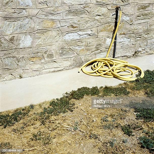 Coiled garden hose lying on path (Digital Enhancement)