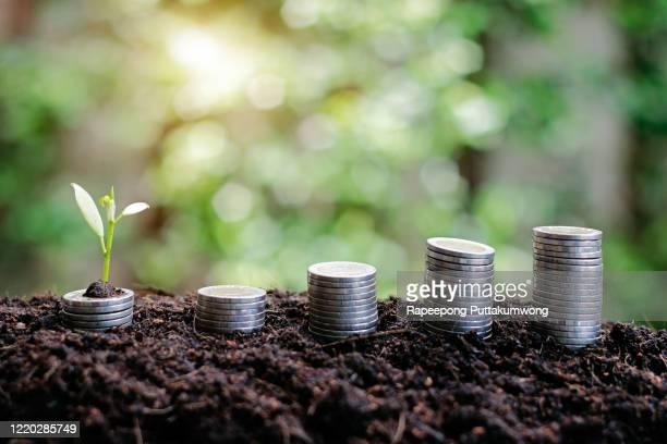 coins and money growing plant for finance and banking. saving money or interest increasing concept. - zinssatz stock-fotos und bilder