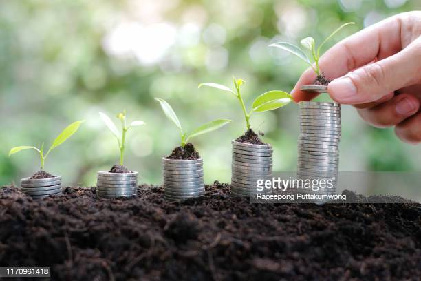 coins and money growing plant in hand for finance and banking. saving money or interest increasing concept. - interest rate stock pictures, royalty-free photos & images