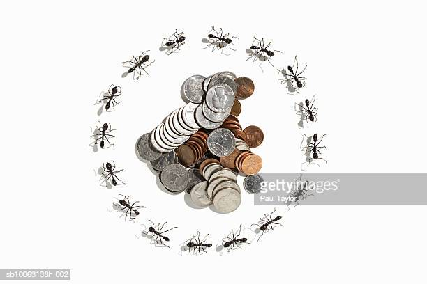 U.S. coins surrounded by ants (Eciton quadrigtume) on white background, overhead view (Digital Composite)