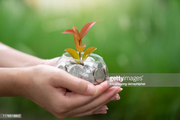a coins with tree in people hands in saving and growing money concept,accounting, - guyana stock pictures, royalty-free photos & images