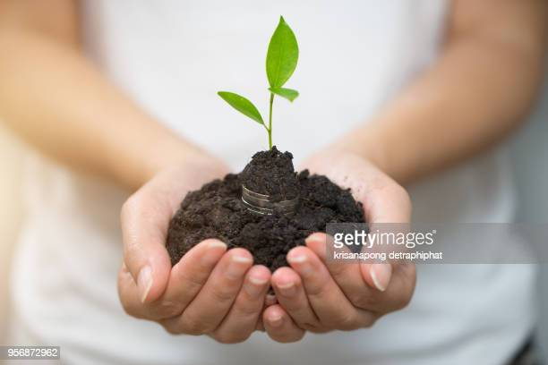 A coins with tree in people hands in saving and growing money concept,Accounting,
