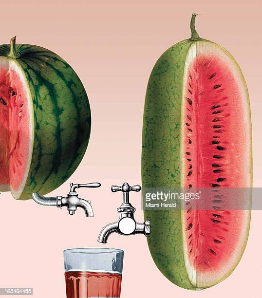 5 col x 11 in / 246x279 mm / 837x950 pixels Philip Brooker color illustration of spigots attached to watermelons and glass of juice
