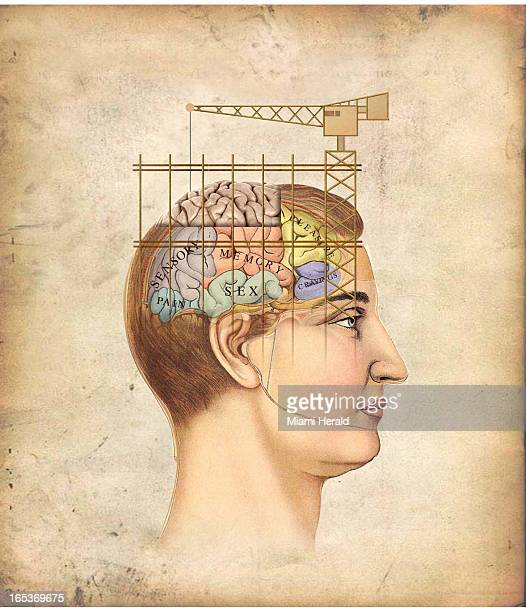 5 col x 1125 in / 246x286 mm / 837x972 pixels Philip Brooker color illustration of crane and scaffolding over human brain with labels for pain sex...