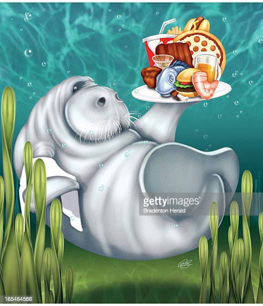 5 col x 1125 in / 246x286 mm / 837x972 pixels Ron Borresen color illustration of a manatee with a plate of seafood and junk food