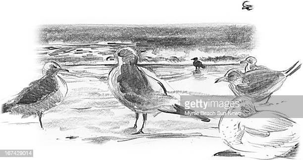2 col x 225 in / 108x57 mm / 368x194 pixels Jason Whitley black and white illustration of seagulls on beach The Sun News /MCT via Getty Images