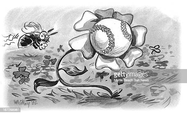 2 col x 23 in / 96x58 mm / 327x199 pixels Jason Whitley BW illustration of bee buzzi ng around flower with a baseball bloom for use with stories...