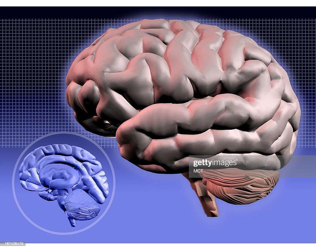 2 col x 3 in / 96x76 mm / 327x259 pixels Kurt Strazdins color illustration of a human brain.