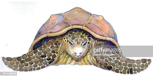 3 col x 325 in / 164x83 mm / 558x281 pixels Ric Thornton color illustration of a Loggerhead turtle The Telegraph /MCT via Getty Images